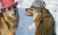 Anekdotai apie vilką, narkomanus ir Baltarusiją