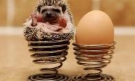 anekdotai apie ežiuką, viščiuką ir kitus gyvūnus