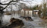Juodkalnijos zoologijos sode pabėgo begemotas (7 nuotraukos)