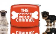 Šuniukų kanalas