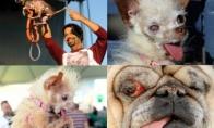 Bjauriausiųjų šunų mugė