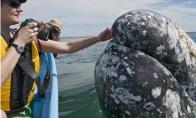 Draugiškiausi pasaulyje banginiai