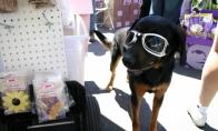 Woofstock – festivalis šunims