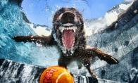 Povandeniniai šunys