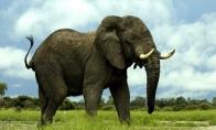 Kaip drambliui penkta koja