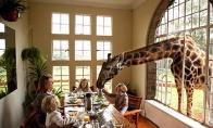 Viešbutis - Žirafos dvaras