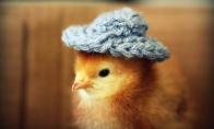 Vištytės su skrybėlėmis