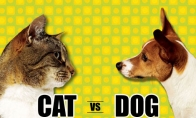 Katė prieš šunį