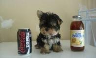 Šuneliai ir gėrimų skardinės