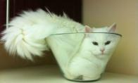 Unikali kačių savybė