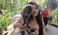 Beždžionės-iškrypėlės