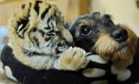 Maži žvėreliai
