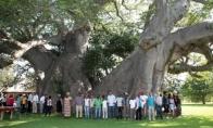 Sunland Baobab - baras baobabe