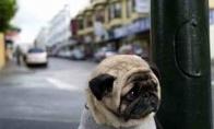 Liūdniausias šunelis pasaulyje