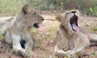 Linksmi animuoti gyvūnų paveiksliukai