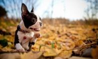 Šunims patinka ruduo