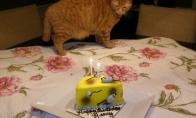 Kačių gimtadienis