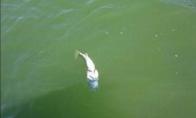 Žuvis paspringo