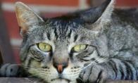 Kas nutiks, jei palikti savo katę vonioje vieną