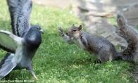 Nejuokauk su voverėm