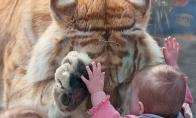 Žvėrių ir žmonių sąmokslas