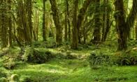 Vienintelė pasaulyje TIKRAI laukinė gamta