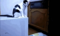 Juokingi animuoti kačių paveiksliukai