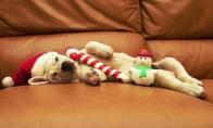 Kalėdoms pasiruošę