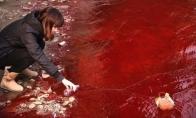 Kraujo upė