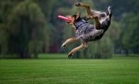 Skraidantys šunys ir skraidančios lėkštės