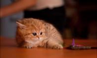 Kaip fotografuojami katukai