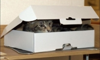 Dvi katės ir tik viena dėžė