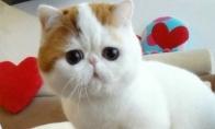Labai mielas kačiukas prausiasi