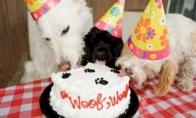 Gyvūnų vakarėliai
