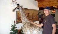 Naminė žirafa