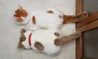 Kuris katinas tikras?