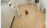 Skraidančios katės