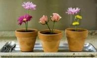 Valgomi  gėlių vazonėliai