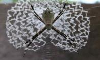 Gražūs voratinkliai