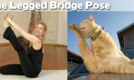 Katukų joga