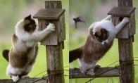 Katukas ir paukštukas