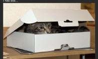 Dėžės invazija