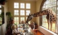 Į svečius užsuko žirafos