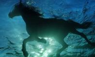 Žirgo maudynės
