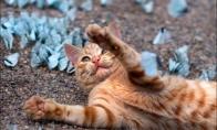 Katinas žaidžia su drugeliais