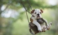 Šuneliai ant supynių