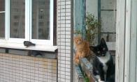 Katės stebi!