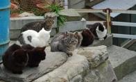 Tashirojima - kačių rojus
