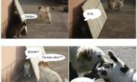 Per daug šūstras katinas