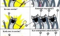 Kačių kaprizai